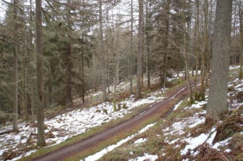 Glentress Trail Conditions Update April 5th